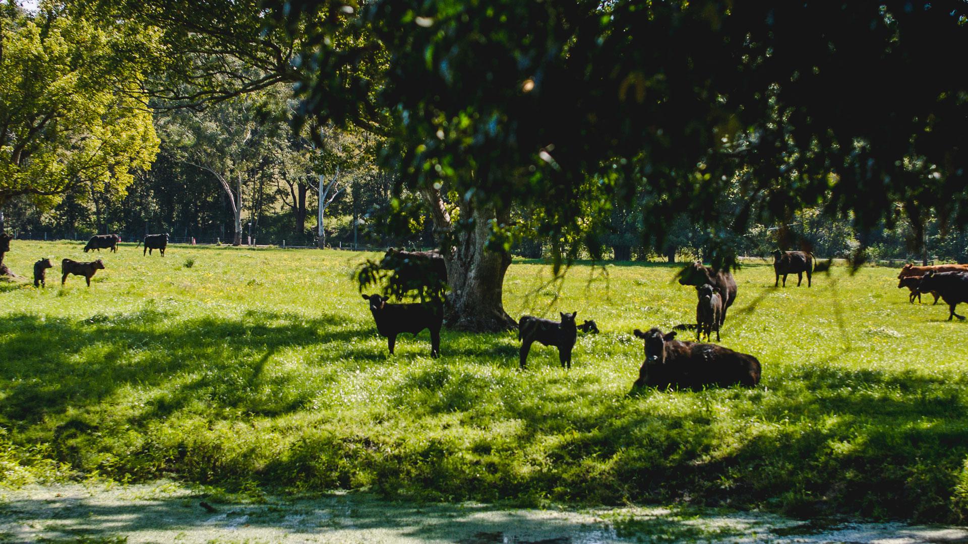 Camden Haven Farmers – Sean Gleeson